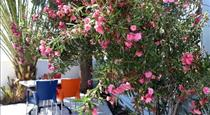Adelphi Apartments, hotels in Perissa